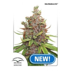 Auto Glueberry O.G. - Dutch Passion