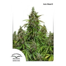 Auto Mazar - Dutch Passion