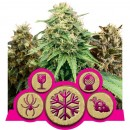 Feminized Mix - Royal Queen Seeds