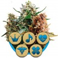 Medical mix - Royal Queen Seeds