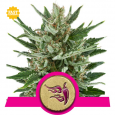 Speedy Chile Fast - Royal Queen Seeds