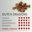 Magic Truffles Dutch Dragons
