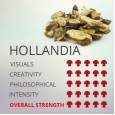 Magic Truffles Hollandia