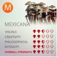 Mexicana Magic Mushroom Grow kit - 1200cc