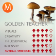 Golden Teacher Magic Mushroom Grow kit - 1200cc